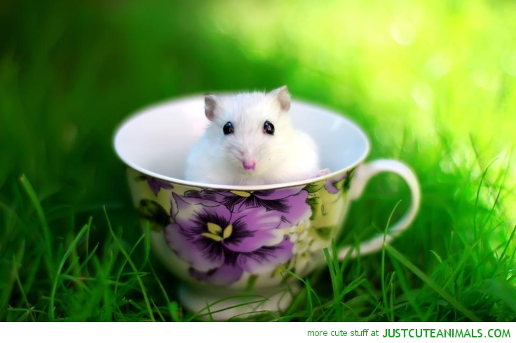 cute-little-mouse-in-tea-cup-picture-cute-animal-pics.jpg