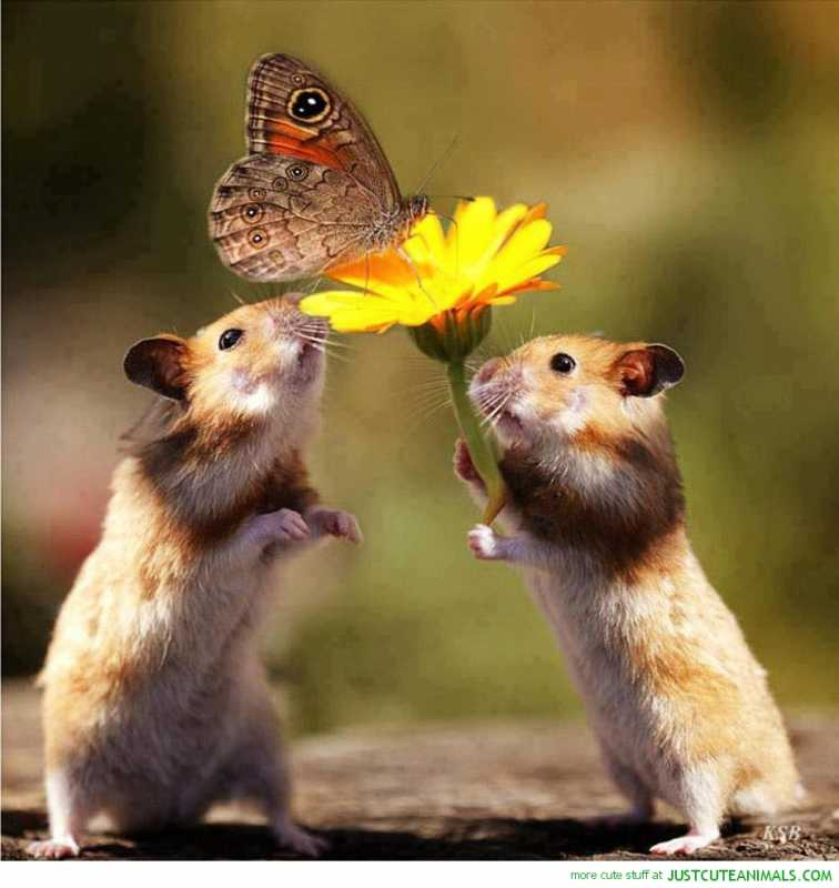 cute-overload-animal-pictures-mice-flower-butterfly-pic-image.jpg